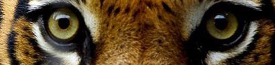 Protected: Feisty Felines